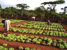 Economy   Ethiopia